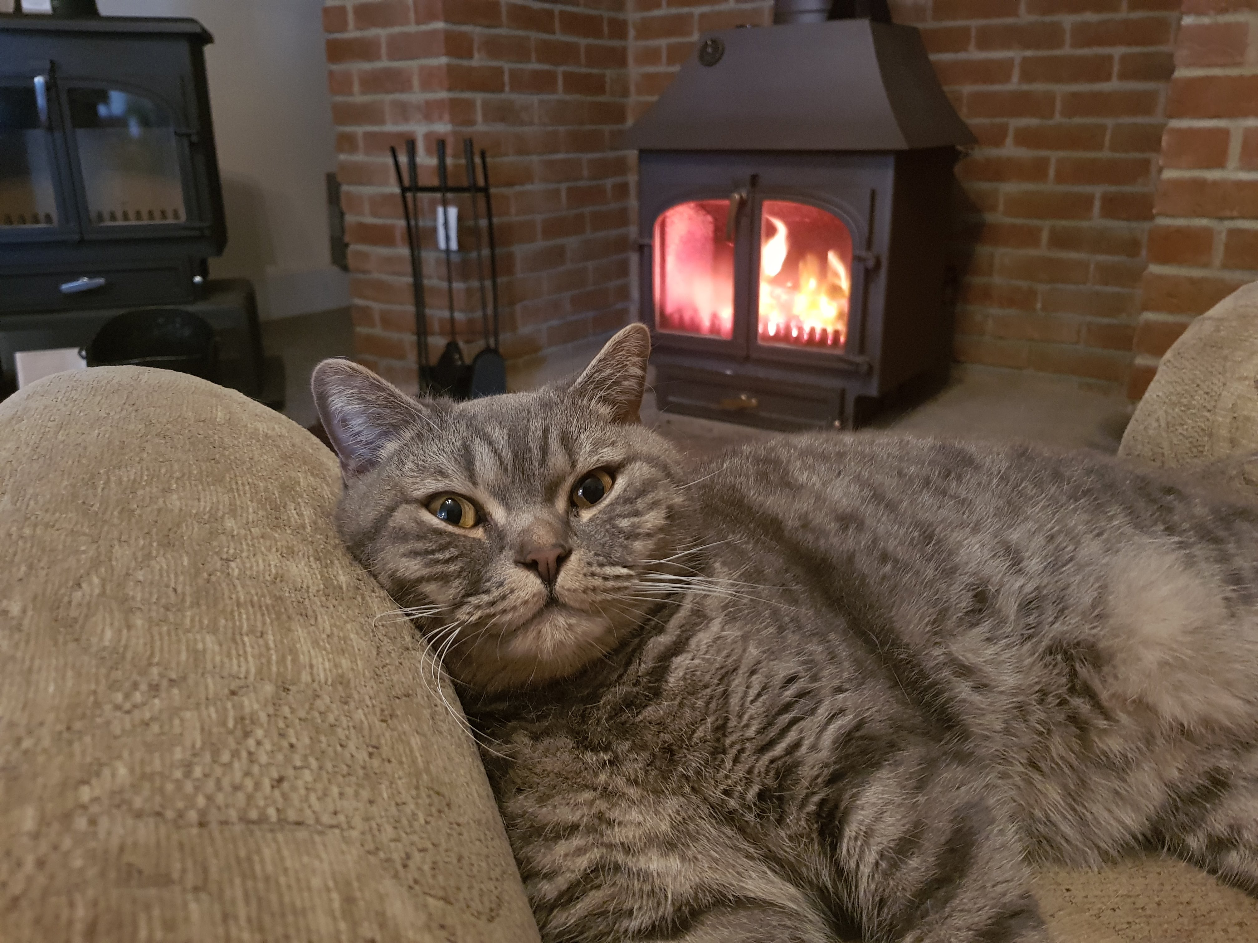 Clearview 650 boiler stove and Asher the showroom cat